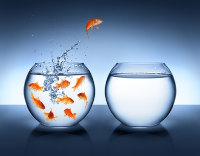 goldfish jumping - improvement and career concept